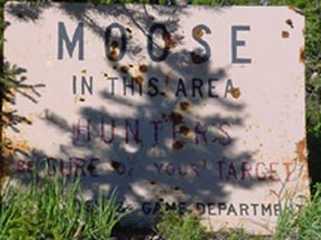 Moose in the area